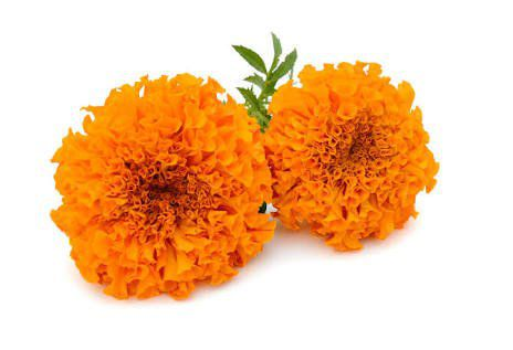 Marigold Flower Extract Lutein And Zeaxanthin For Eyes & Eyes