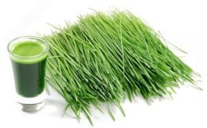 Barley Grass Powder for Lose Weight